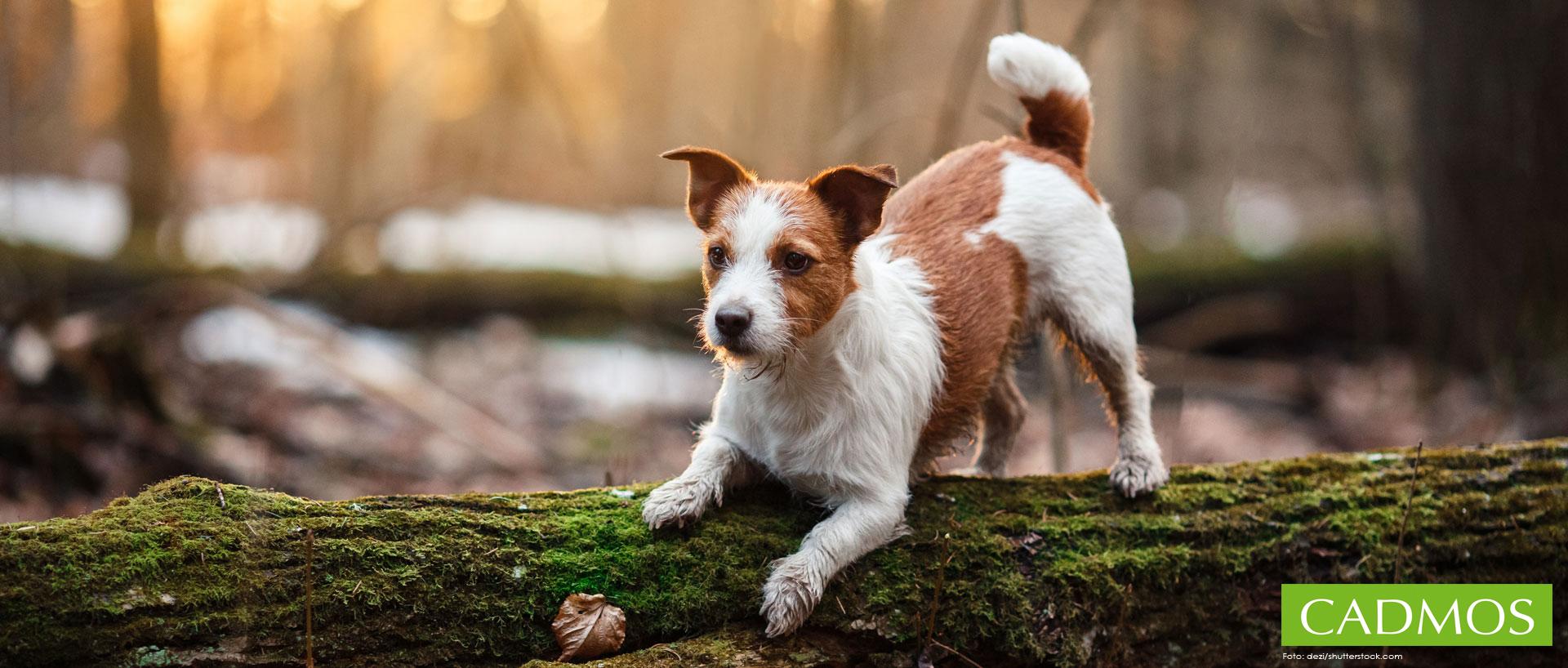 Hundebücher von CADMOS