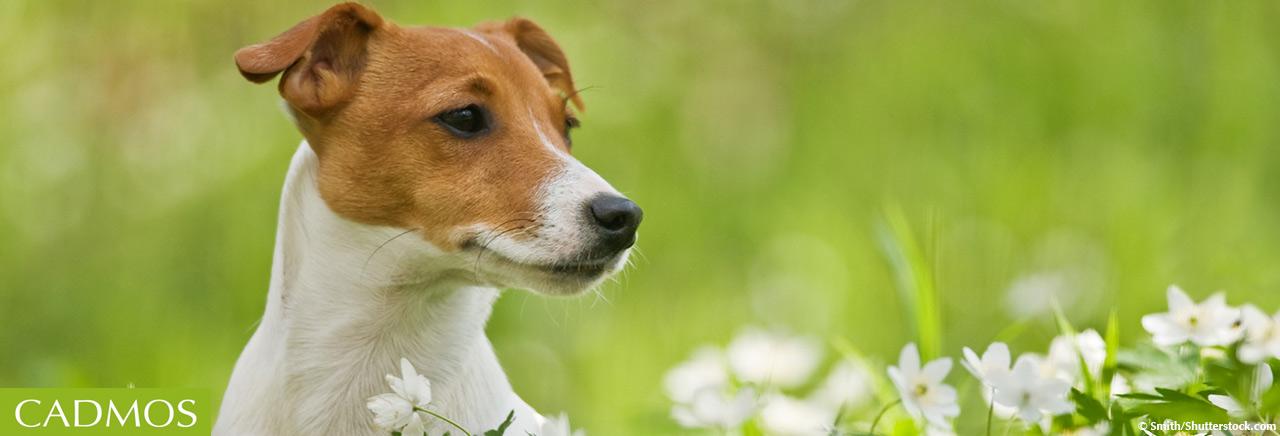 Hundebücher bei CADMOS…